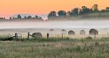 Bales In Sunrise Mist P1080198-200