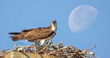 Osprey & Moon DSCF12325.34