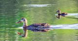 Duck & Duckling DSCF13225