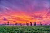 Sunrise Over Cornfield P1080656-8