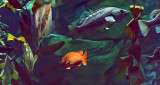 Orange Fish P1080839
