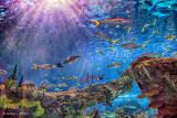 Ripley's Aquarium Canada P1080850