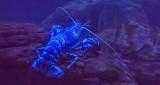 Blue Lobster P1080819-21