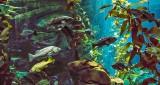 Ripley's Aquarium Canada P1080832