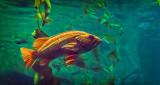 Ripley's Aquarium Canada P1080836