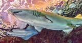 Shark & Stingray P1080862