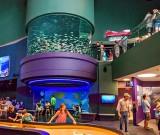 Ripley's Aquarium of Canada P1080893-4