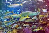 Ripley's Aquarium of Canada P1080888