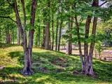 Landscape DSCF14505-7
