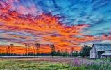 Pasture Sunrise P1090684-9