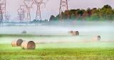 Bales In Ground Fog P1100676