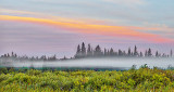 Suspended Fog At Sunrise P1100667