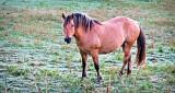 Equine Pal P1100686