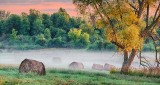 Bales In Sunrise Ground Fog P1100740-2