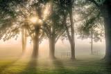 Foggy Sunrise At Edmonds Lockstation P1110238-40