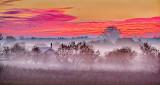 Sunrise Ground Fog P1110554-6