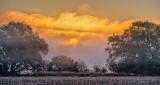 Fogged Sunrise P1110888-93