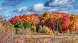 Autumnscape P1140446-8