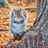 Hopeful Squirrel DSCN01309