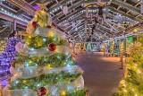 Crystal Palace Christmas Lights P1160211-5