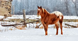 Winter Equine Pal DSCN01918