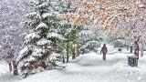 Snowy Evergreen Avenue P1250138