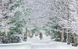 Snowy Evergreen Avenue P1250050
