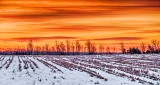 Winter Cornfield Sunrise P1160960-2