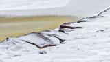Snowy Shoreline Rocks P1250197-9