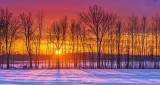 Tree Row Sunrise Shadows P1180150-6