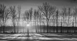 Tree Row Sunrise Shadows P1180150-6BW