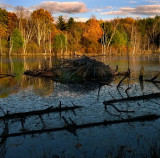 Beaver Lodge in the Glow