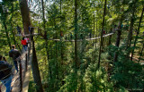 Treetop Adventure II