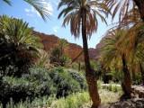 Dans l'oasis d'Ait Mansour