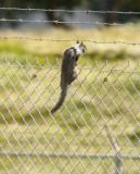 Jailbreak Squirrel
