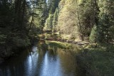 The Calm Merced River