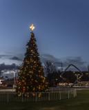 Still Christmas in Cupertino