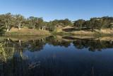 Will's Pond