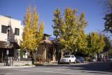Ginko Trees in Saratoga, Ca