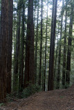 Hike through the Redwoods
