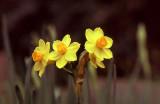 Narcissus (film)