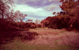 Last year - The dry Pichetti Pond (film)