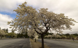 Parking Lot Orchard