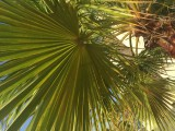 160326 Al Muneera Promenade - 009.jpg