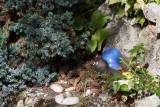 Escargot du jardin