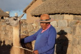 Serge et le lama