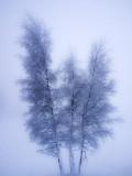 cristalline blue