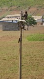 telephone wire repairman