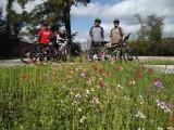 The Woodland Biking