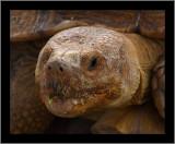 Turtles (Slow But Sure)